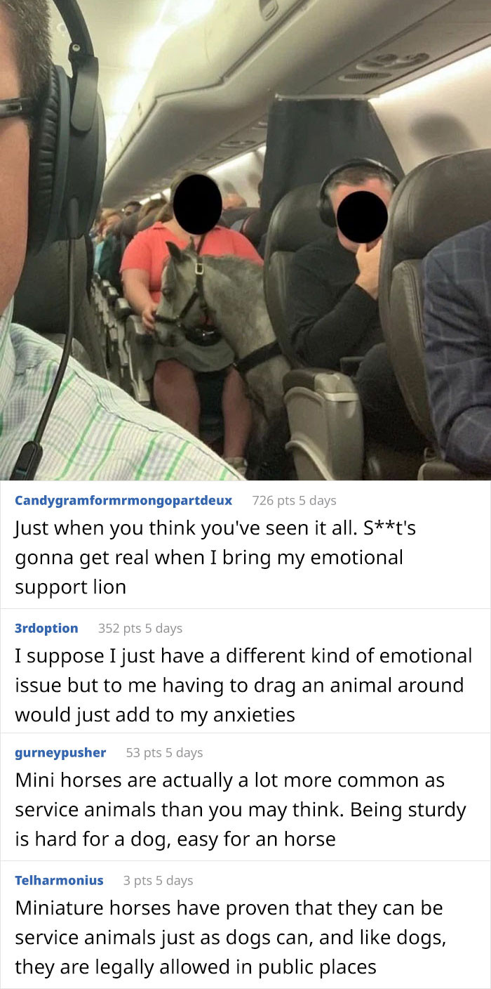 2. An Emotional Support Pony On a Flight