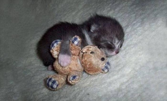 6. Cuddle buddies