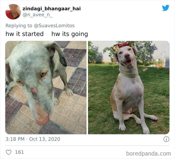 3. Happiest doggo on earth