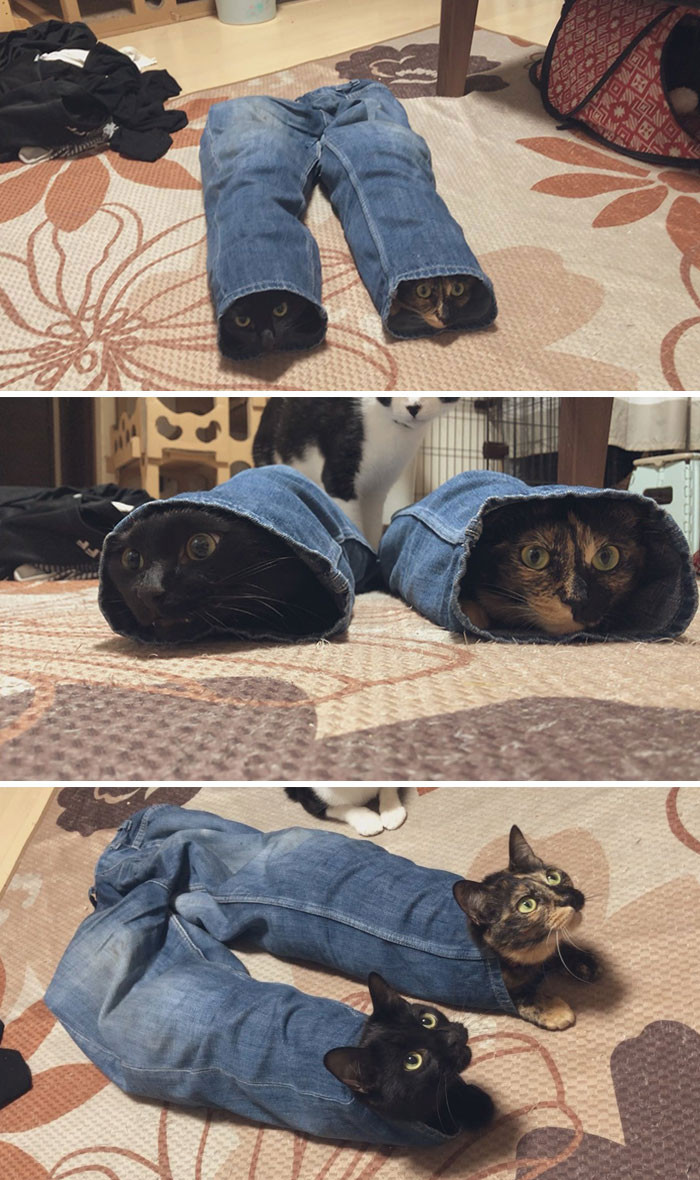 5. Cats and jeans