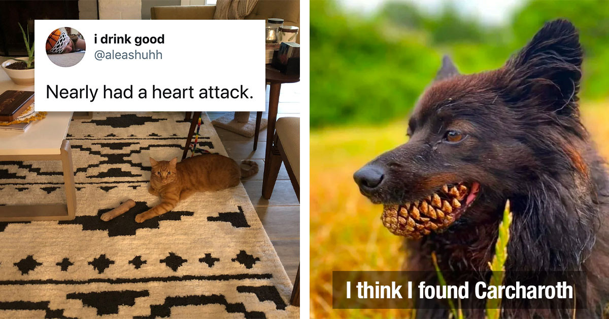 24 Pets That Hilariously Scared The Crap Out Of Their Owners