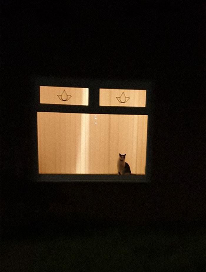 #16 My Cat. Not My House