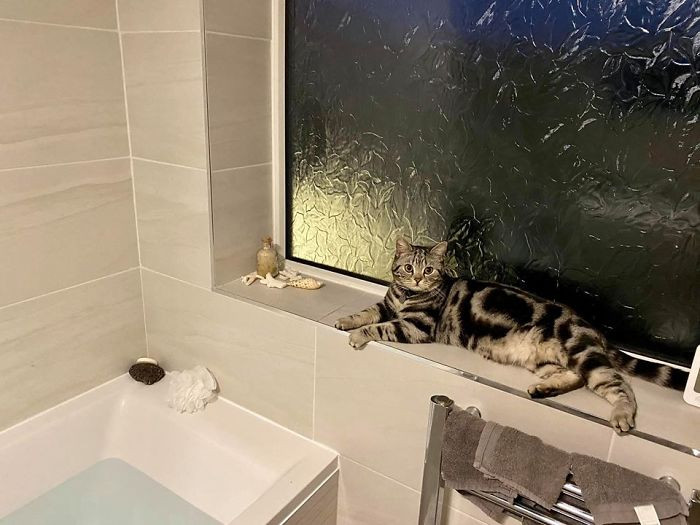 #11 This Is My Bathroom.... This Is Not My Cat! This Is My Neighbours Cat Ted!