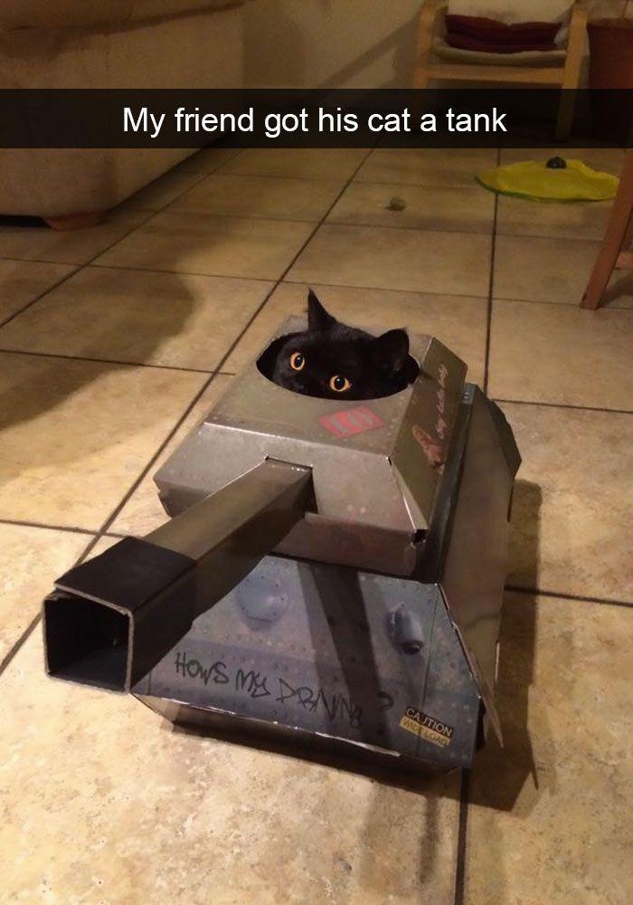 107. Battle Kitty is ready for battle.