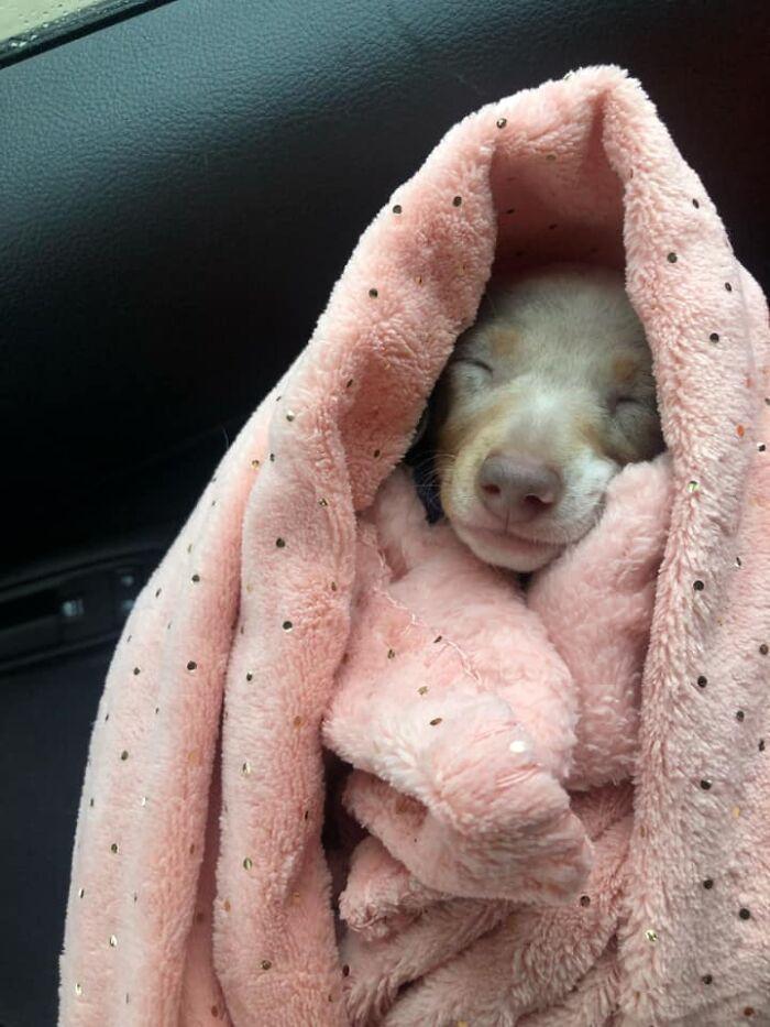 #28 Snuggles