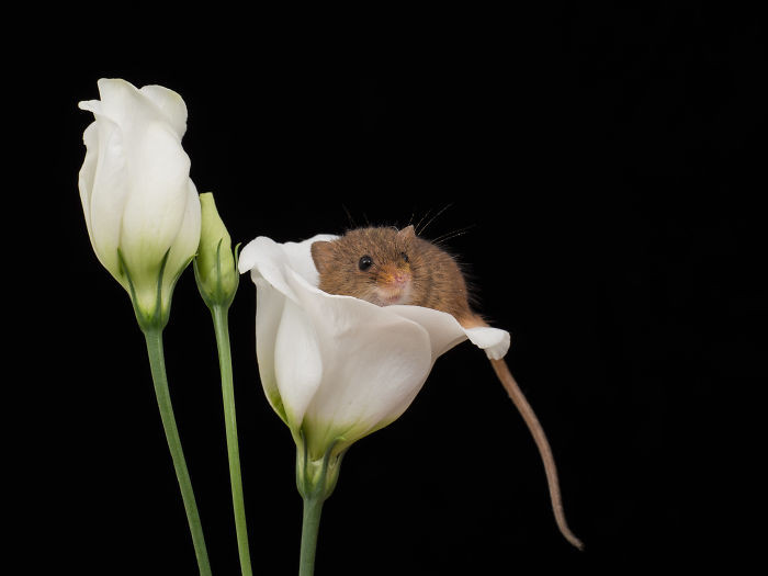 #10 There Are Little Tiny Harvest Mice That Sleep Inside Flowers