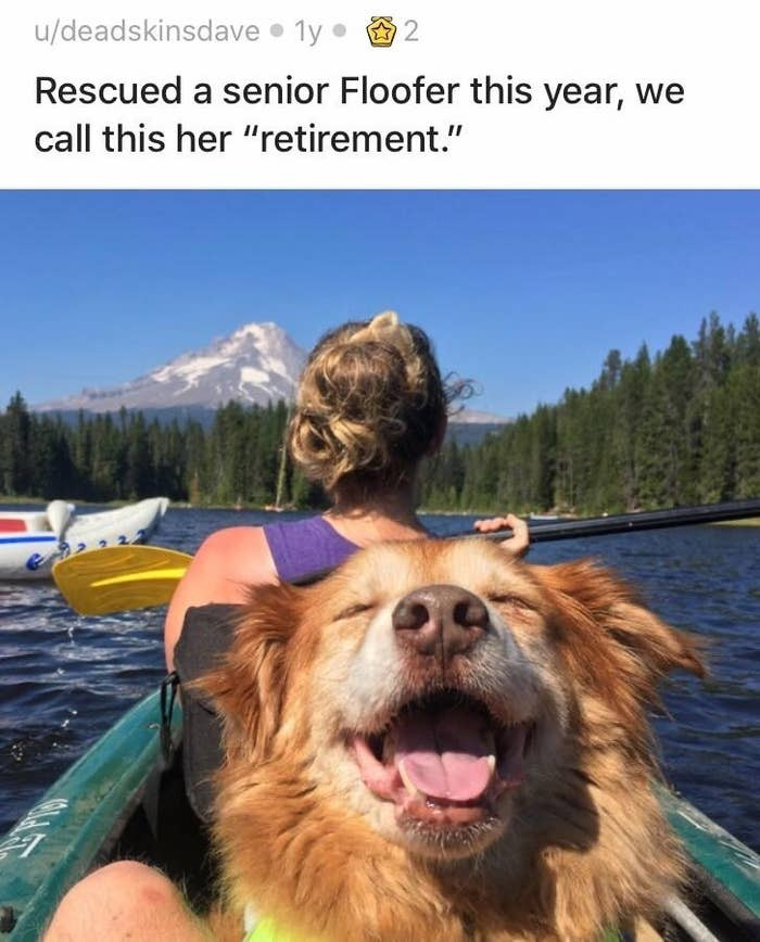 3. This is the retirement every dog dreams about.