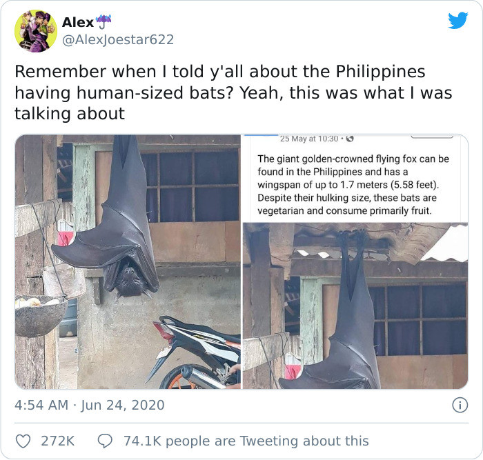 """After this picture of a """"human-sized"""" bat went viral, people started questioning its authenticity"""