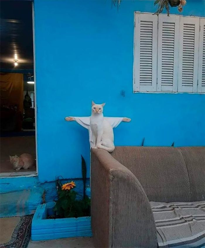 26. Holy Cat