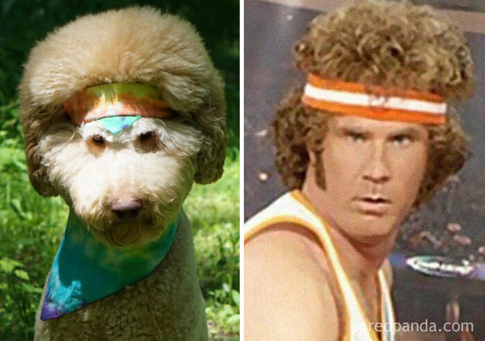 7. Is that Will Ferrell? Yup.