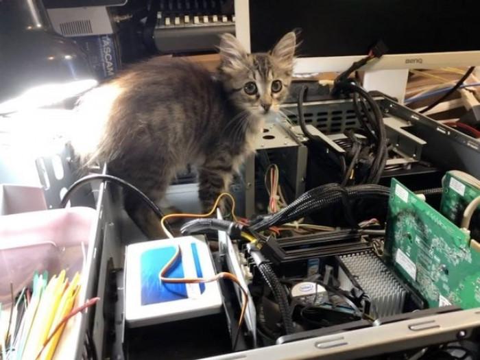 2. Brisket just kitten around on her first day as an intern