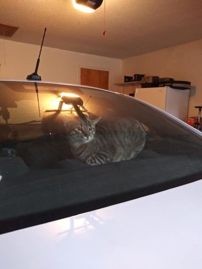 #28 Soooo, This Is My Car, That Is Not My Cat