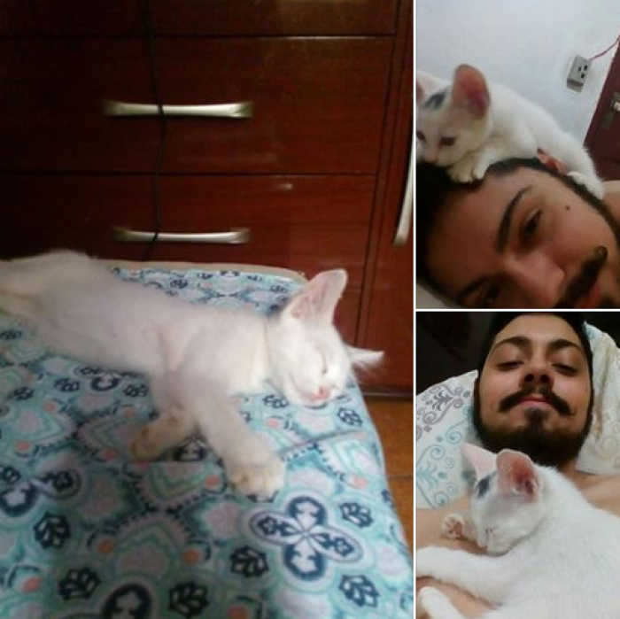 """2. """"First photo: this was not my cat. He just entered my house and slept in my bed."""