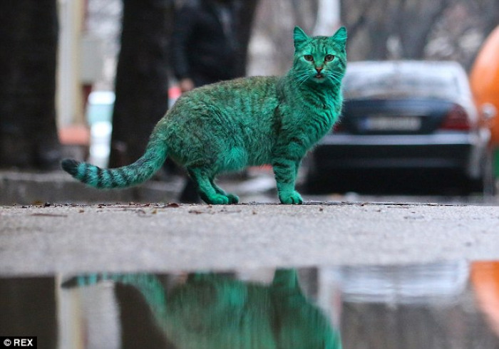 The startling sight of this stray, turquoise cat got locals in Varna, Bulgaria is an understandable upoar.