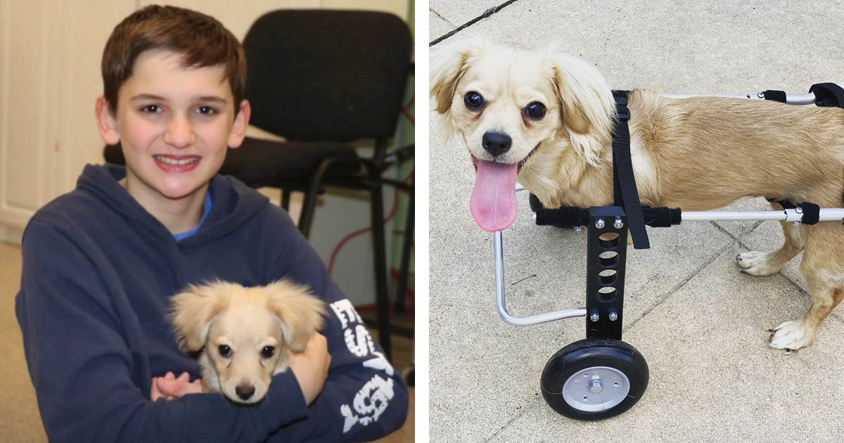 Dog With A Custom-Made Lego Wheelchair Is The Best Thing Ever