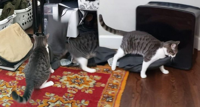 """11. """"Google made a panorama of my cat stealing my husband's pants out of his closet."""""""