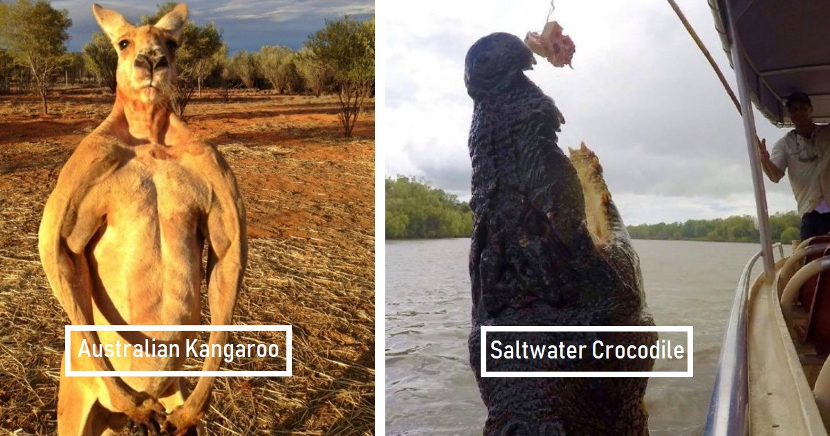Australia Is Famous For All Of Its Dangerous Animals That Are Completely Savage