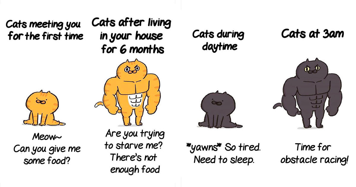 These Hilarious Comics Perfectly Illustrate Life As We Know It When Cats Are Involved