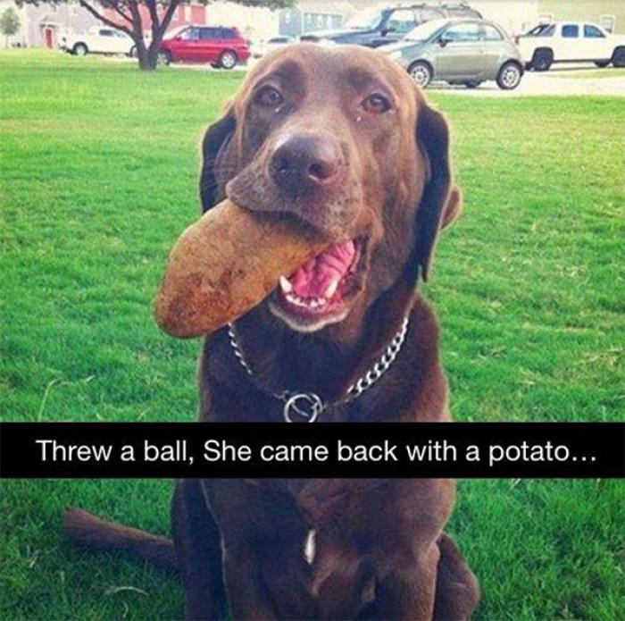 20. Potato