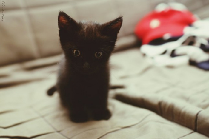 15. Itty bitty, adorable kitty.