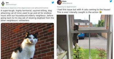 Cats Make The Best Uninvited Guests And These Hilarious Pictures Prove It