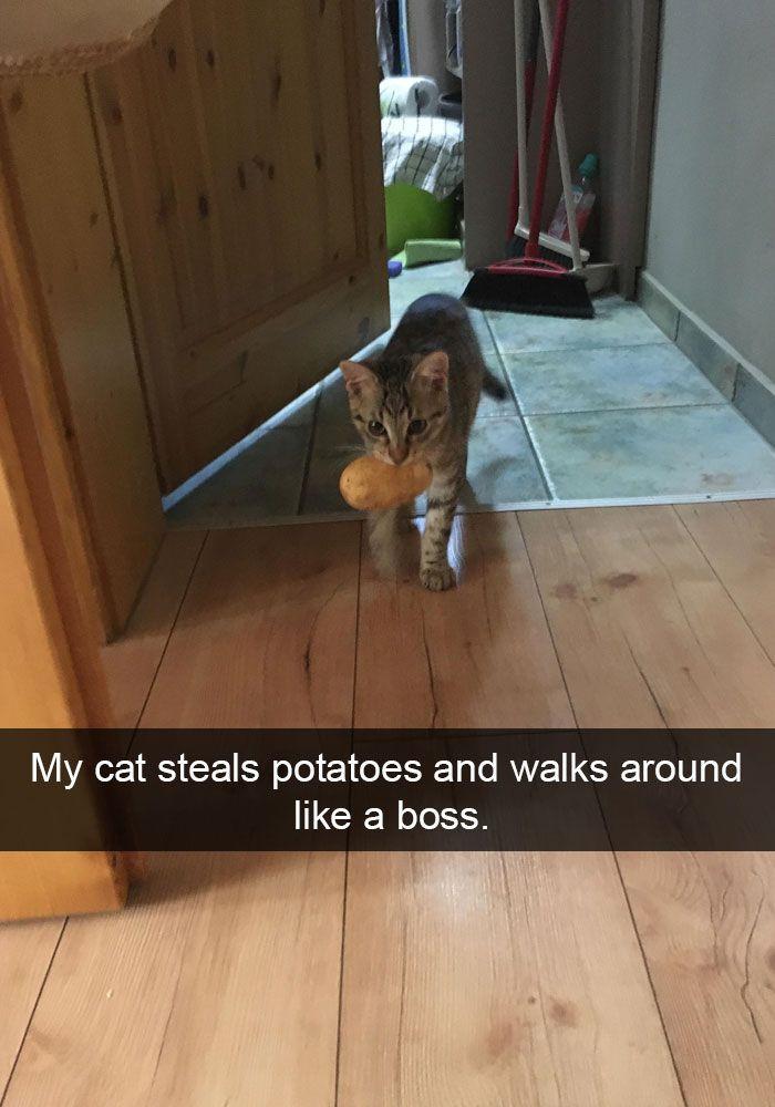 69. Potato Boss