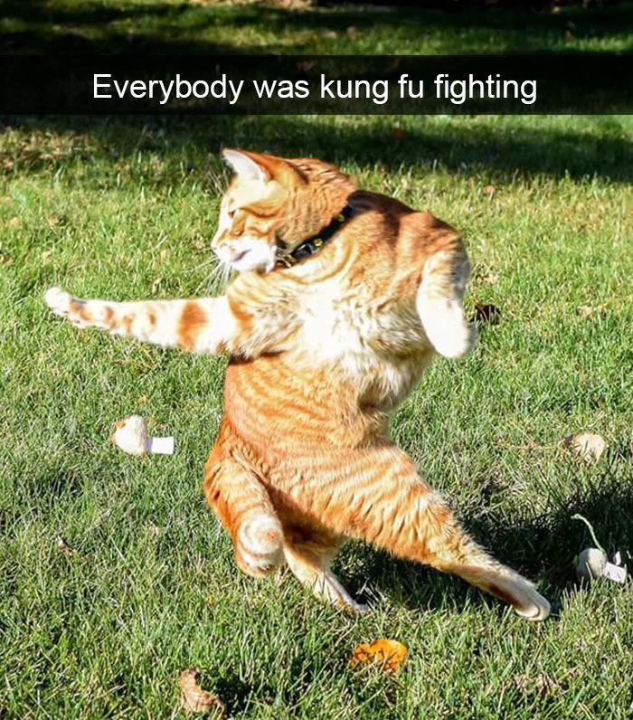 87. Kung Fu Kitty