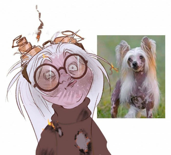 #12 Chinese Crested