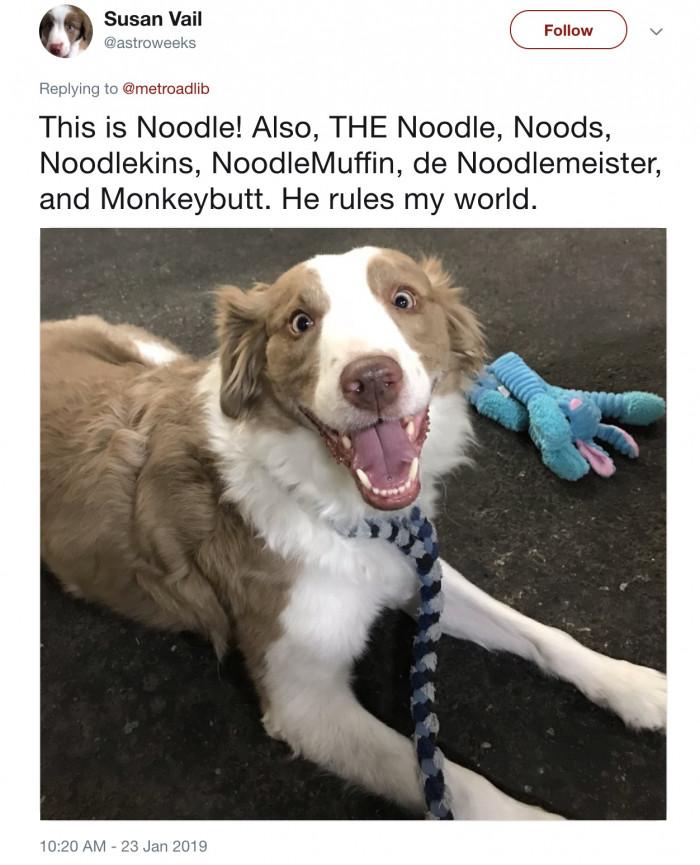A dog named Noodle