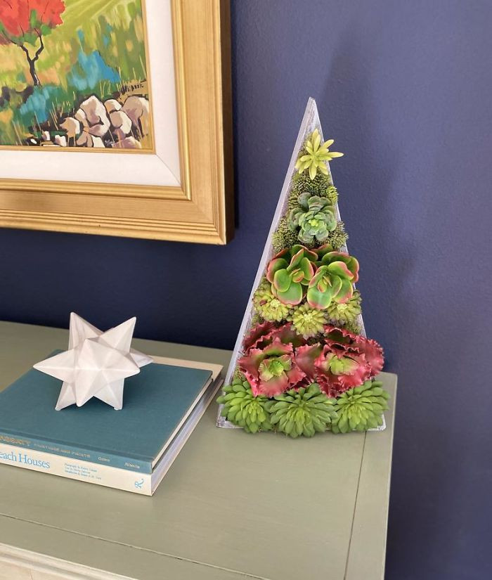 TheSavvySucculents rounds up the competition with the largest Succulent Christmas Tree on the market.