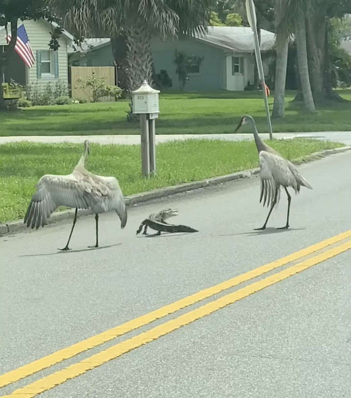 They Have Finally Reached The Other Side Of The Road