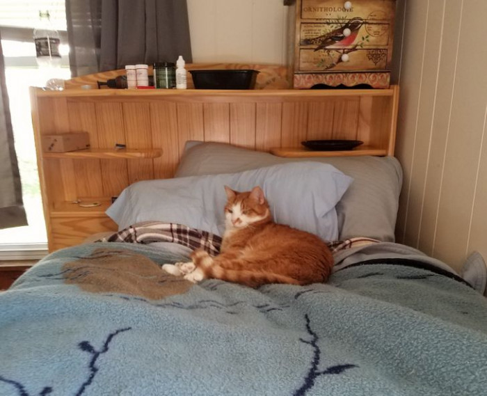"""12. """"Rufus lying on his cat bed that he allows his human to borrow on a nightly basis"""""""