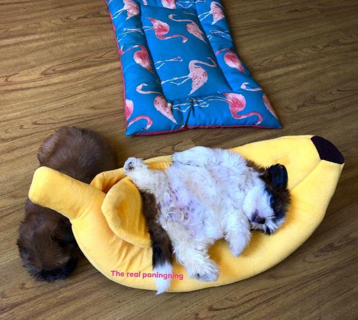 #7 Banana Lounge