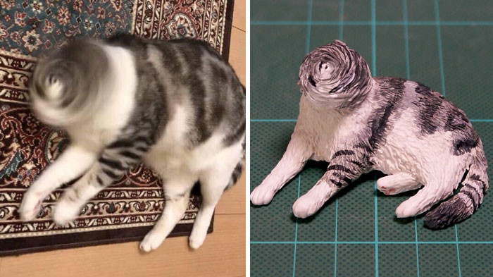24. This cat lost her face.
