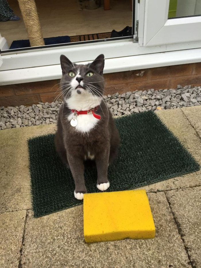 33. Cat Won't Stop Bringing Home Sponges