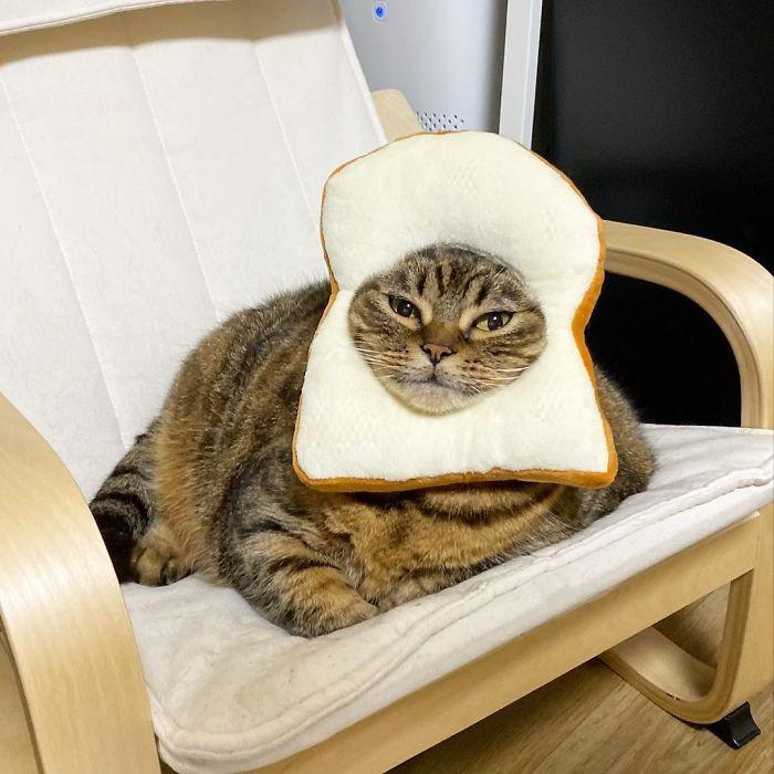 #27 Bread Face