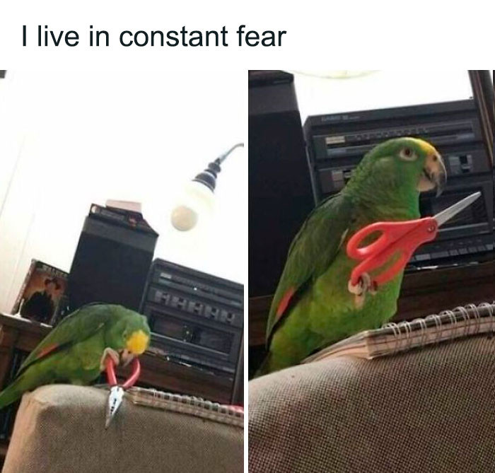 #17 Fearbirb