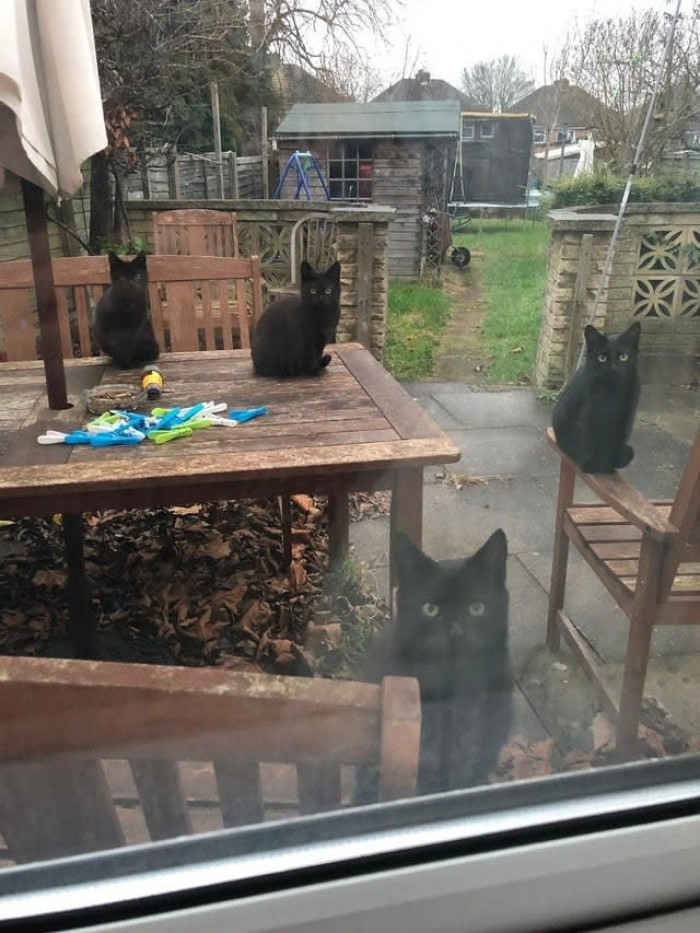 The Black (cat) Parade
