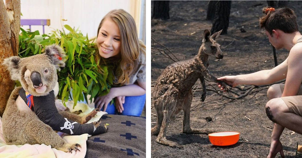 Photos Of Animals Being Saved From The Fires That Are Still Raging In Australia