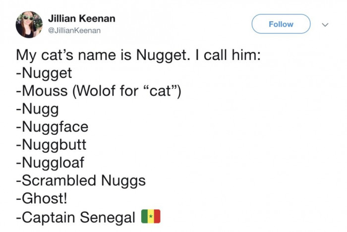 A cat named Nugget