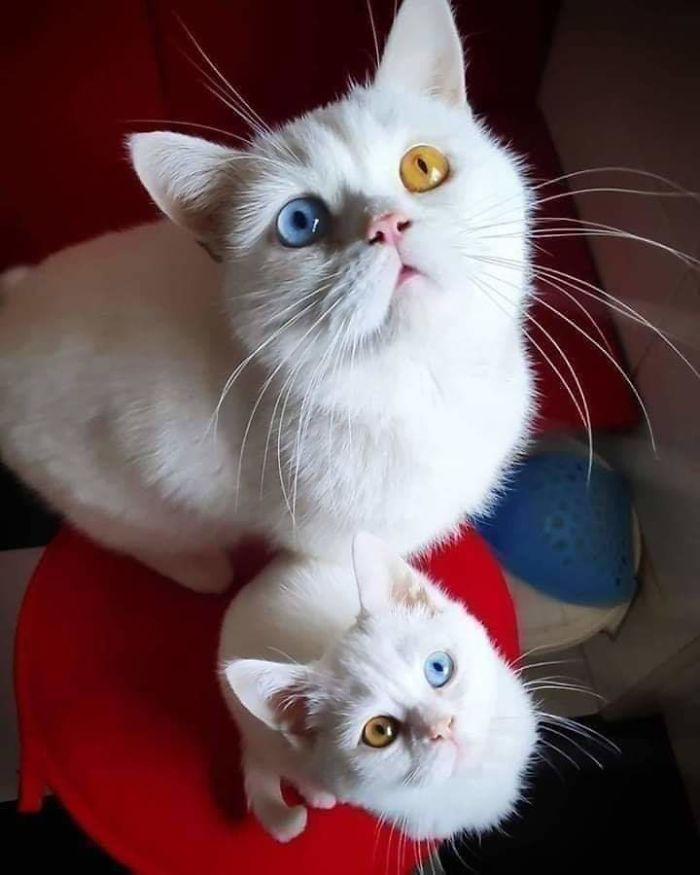 3. Exact copy… you might even say: copy cat *ba dum tiss*