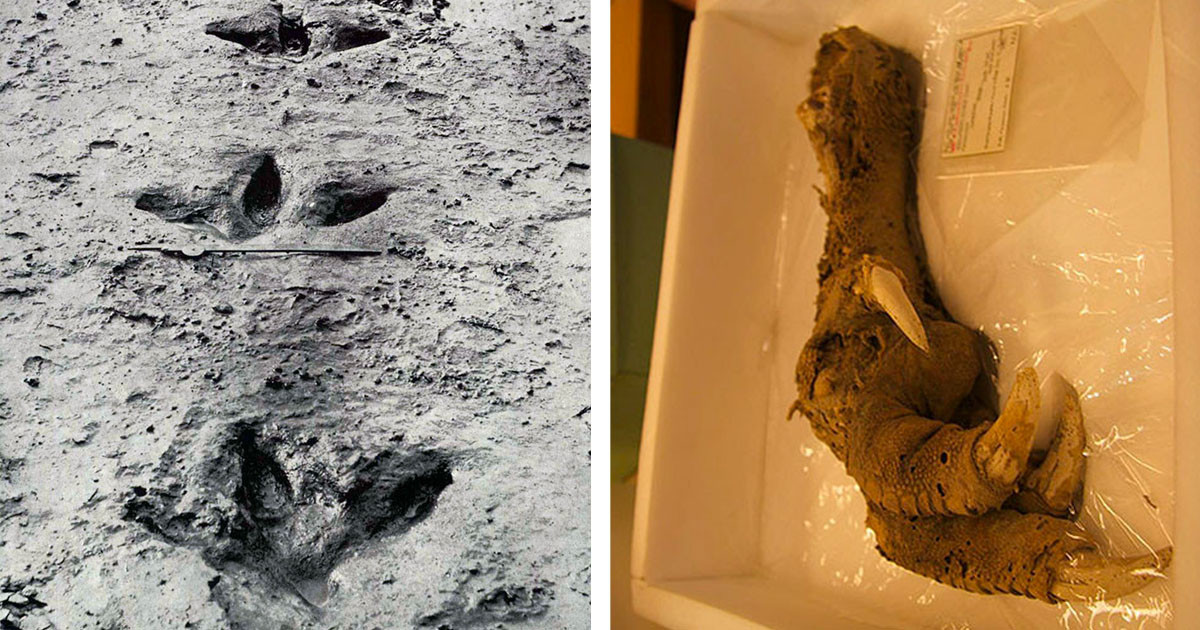 A Rare Find Of A Claw From An Animal That Went Extinct 700 Years Ago Sparked An Online Debate About If 2020 Is The Right Year To Try Cloning It