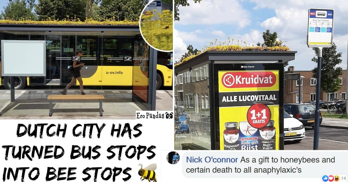 This City In The Netherlands Has Turned Their Bus Stops Into Bee Stops