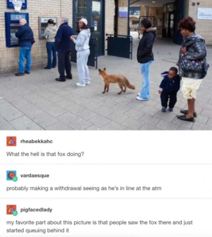 Foxes have right too