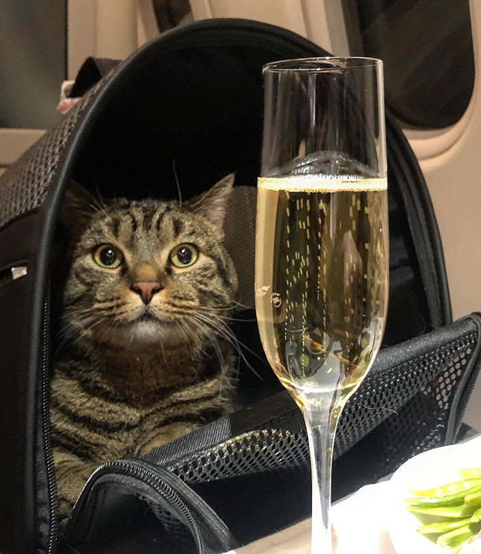 Then he swapped the two cats at check-in and returned the borrowed cat to it's rightful owner, before successfully boarding the plane with Viktor in his hands.