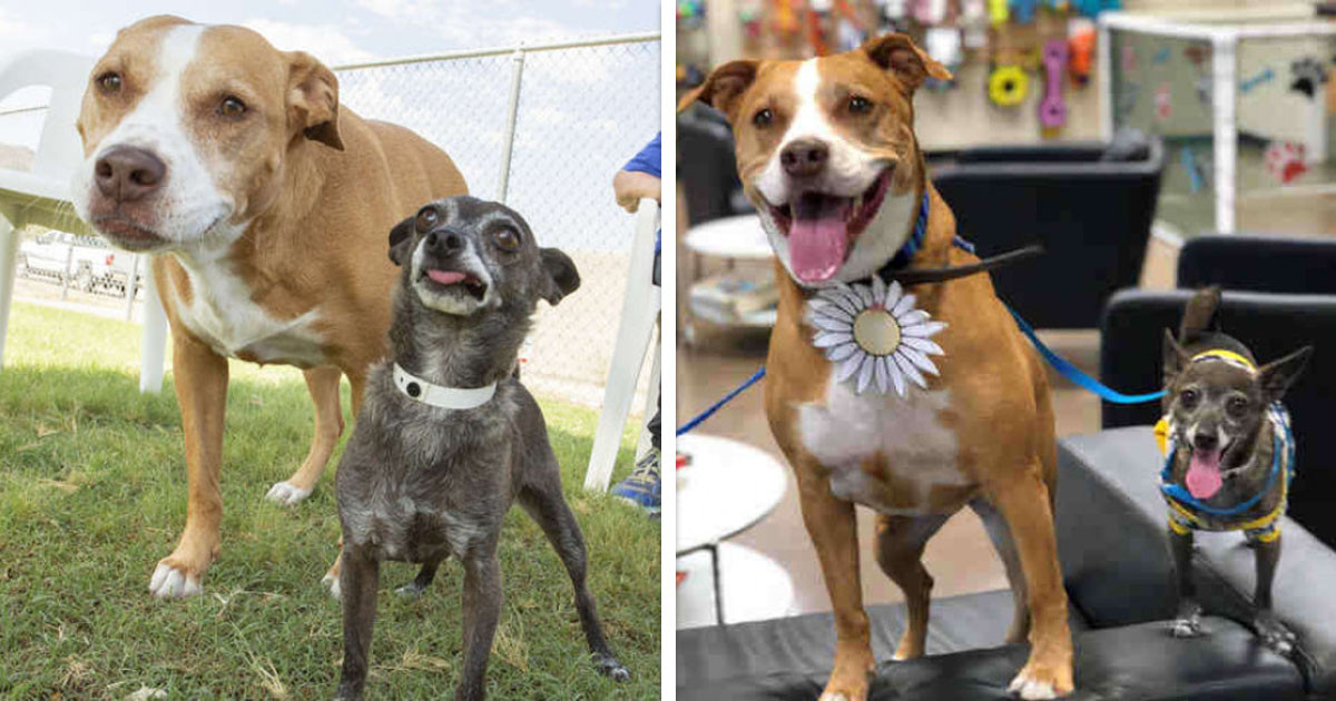These Two Doggo Friends Have Spent 128 Days In A Shelter Because They Refuse To Be Adopted Separately