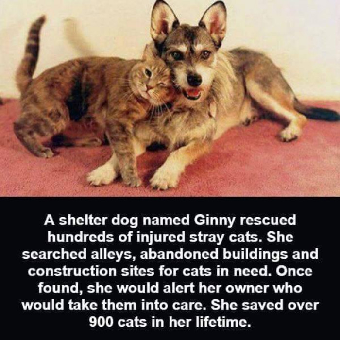 3. Ginny is the real MVP