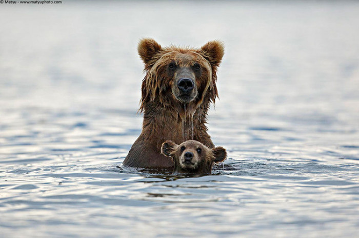 2. Mama and baby grizzly bear