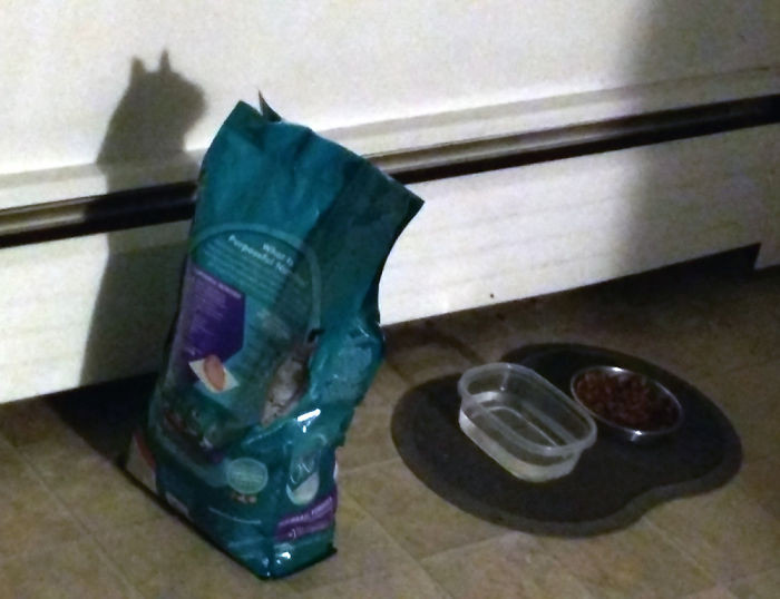 #14 The Ghost of Cat Food Past