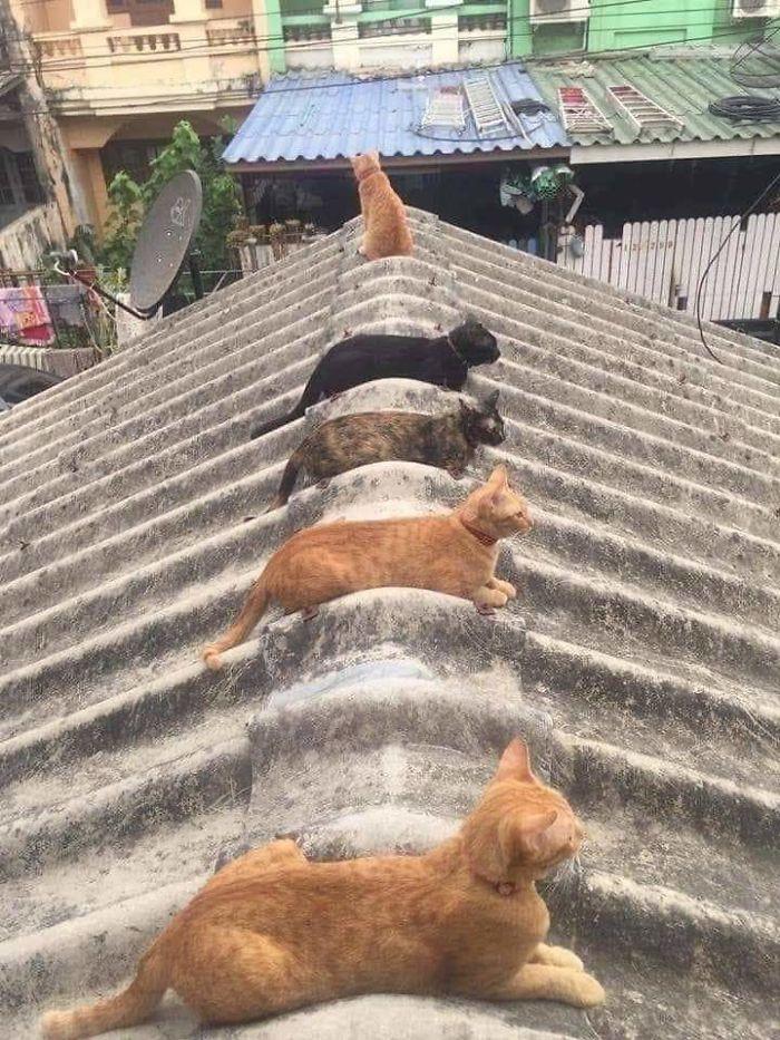 2. Responsible kitties